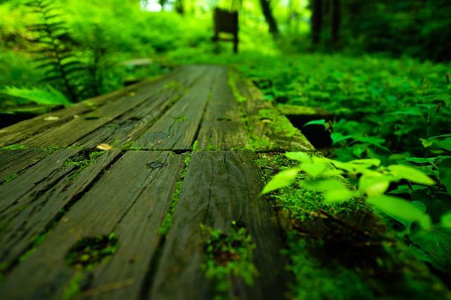 緑が生い茂る道
